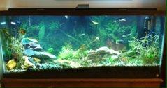 Click image for larger version  Name:aquarium.jpg Views:49 Size:10.2 KB ID:12810